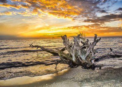 Drift Wood Stump at Sunset